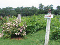 cape-cod-winery-wineries-in-ma