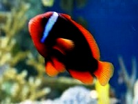 lovely pets aquariums in ma