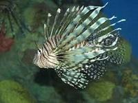 seascapes aquariums aquariums in ma