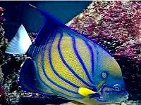 tropic isle aquarium aquariums in ma