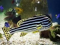 underwater world aquarium aquariums in ma