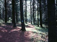 callahan-state-park-ma