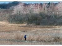 parker-river-national-wildlife-refuge-ma