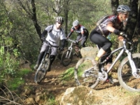 douglas-state-forest-biking-ma