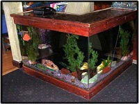 exotic fish & pet world aquariums in ma