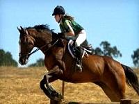 liberty tree farm horseback riding in ma